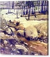 Tuolumne Stream Canvas Print