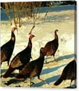 Turkey Call Canvas Print