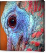 Turkey Head Shot Canvas Print