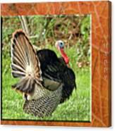 Turkey Strut Canvas Print