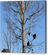 Turkey Vulture Tree Canvas Print