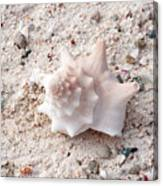 Turks And Caicos Shell Canvas Print