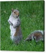 Turning Squirrel Canvas Print