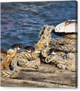 Turnstones At The Harbour Canvas Print