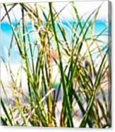 Turquoise Splender Canvas Print