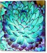 Turquoise Succulent 2 Canvas Print