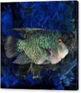 Turquoise Texas Cichlid  Canvas Print