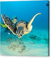 Turtle And Diver Canvas Print
