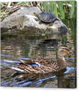 Turtle And Duck Canvas Print