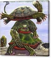 Turtle Circus Canvas Print