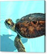 Turtle Close-up  Canvas Print