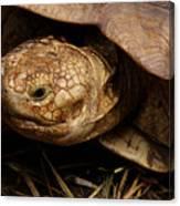 Turtle Closeup Canvas Print