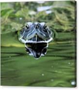 Turtle Head Canvas Print
