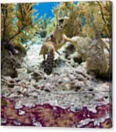 Turtle Red Carpet Canvas Print