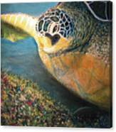 Turtle Run Canvas Print
