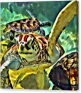 Turtle Swim Canvas Print