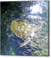 Turtle Water Glide Canvas Print