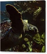 Turtle Wave Canvas Print