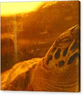 Turtled Canvas Print