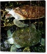 Turtles Canvas Print