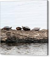 Turtles Canvas Print