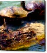 Turtles On A Log Canvas Print