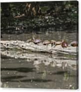 Turtles Sunning On A Log Canvas Print