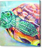 Turttleneck Canvas Print
