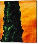 Tuscan Cypress Canvas Print
