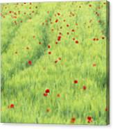 Tuscan Monet Canvas Print