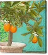 Tuscan Orange Topiary - Damask Pattern 3 Canvas Print