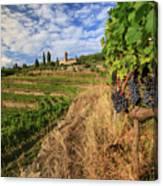 Tuscan Vineyard And Grapes Canvas Print