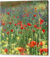 Tuscan Wildflowers Canvas Print