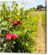 Tuscany Villa And Roses Canvas Print