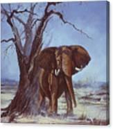 Tusker Canvas Print