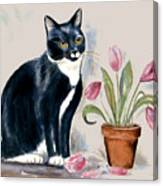 Tuxedo Cat Sitting By The Pink Tulips  Canvas Print