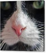 Tuxedo Cat Whiskers And Pink Nose Canvas Print