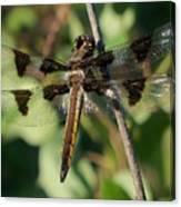 Twelve Spotted Skimmer Dragonfly Canvas Print