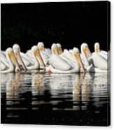 Twelve White Pelicans On A Dark Background. Canvas Print