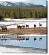 Twice The Elk Canvas Print