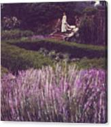 Twilight Among The Lavender Canvas Print