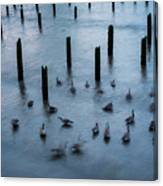 Twilight Geese Canvas Print
