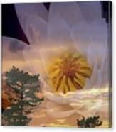 Twilight Lily Canvas Print