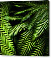 Twilight Rainforest Fern  Canvas Print