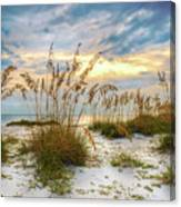 Twilight Sea Oats Canvas Print
