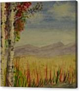 Twin Birch Trees Canvas Print