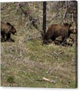 Twin Grizzlies-signed-#3299 Canvas Print