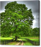 Twin Oaks Drive Southern Living Canvas Print