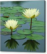 Twin Reflections Canvas Print