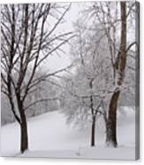 Twins Trees In The Snow Canvas Print